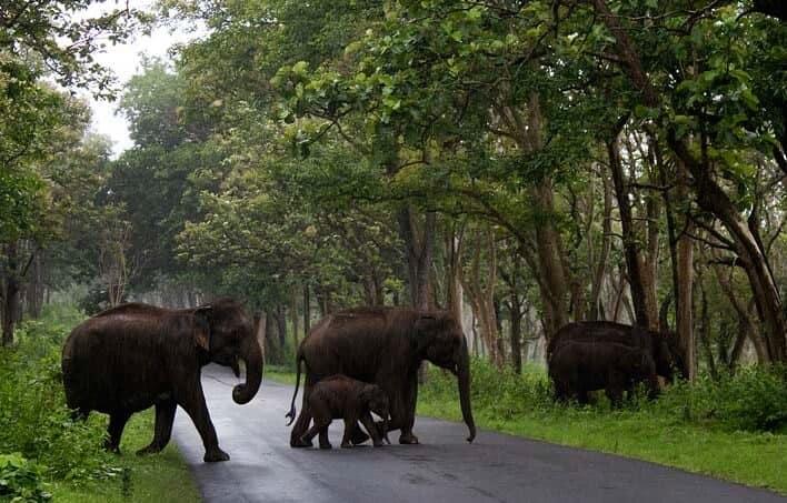 Dubare-Elephant